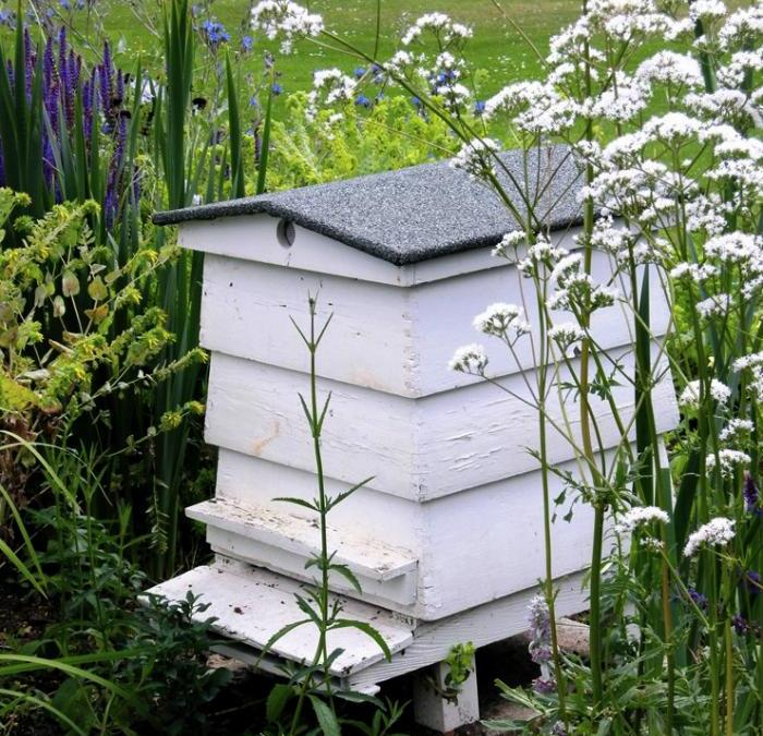 Honey Bees Help to Fight Cancer