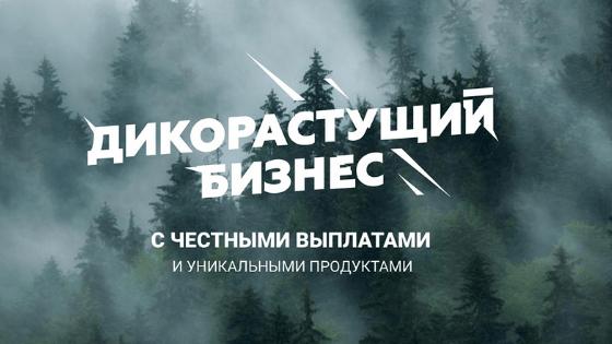 "О Vilavi и о Tayga8| Блог ""Будь яркой"""