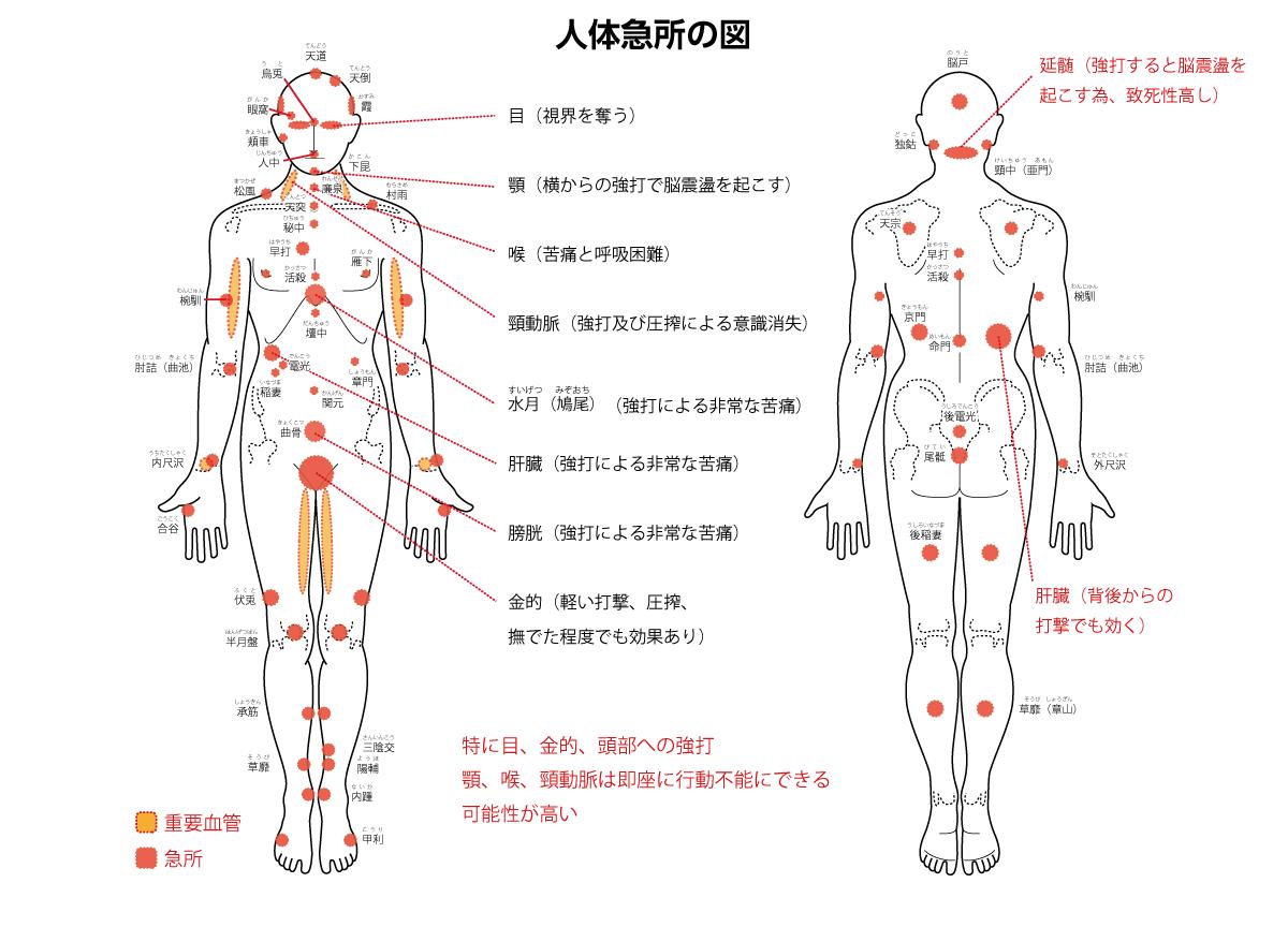 人体急所の図
