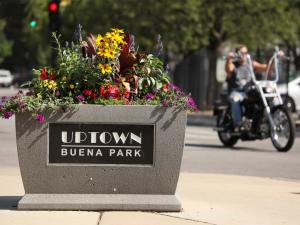An Uptown Buena Park sidewalk planter full of flowers