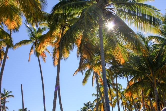 Plamiers-Playa-bonita-Las-terrenas