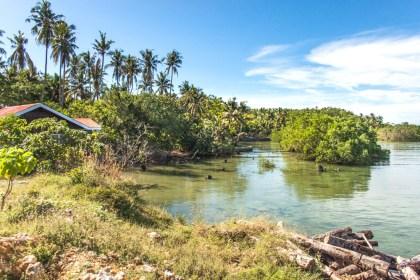 Mangrove - île de Siargao aux philippines