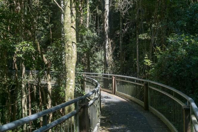 Birds boardwalk du Dorrigo National Park