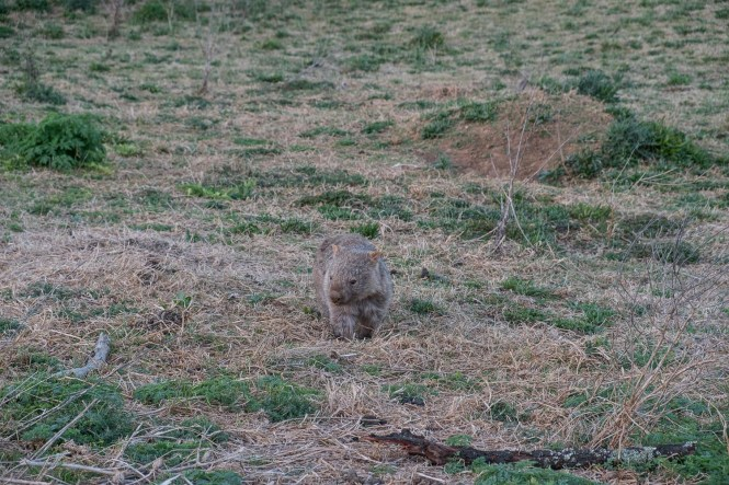 Wombat Bendeela Recreation AreaKANGAROO VALLEY