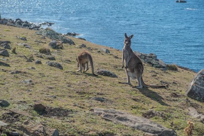 FOSSIL CLIFFS MARIA ISLAND road trip Tasmanie itinéraire 2 semaines