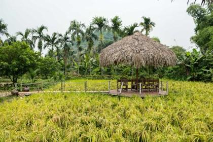 village de Yen Duc bai tu long vietnam