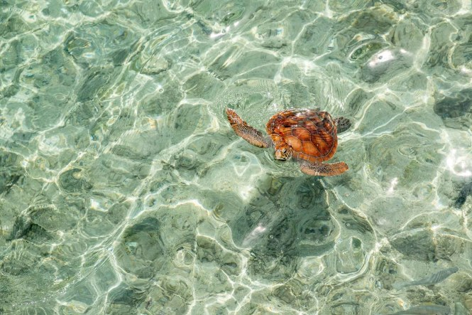InterContinental-bassin-tortues-moorea