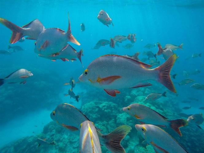 Tuamotu-atoll-rangiroa-snorkeling