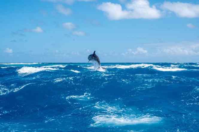 rangiroa-passe-tiputa-dauphins