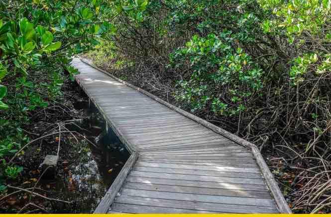 sentier-de-la-mangrove-de-Ouémo