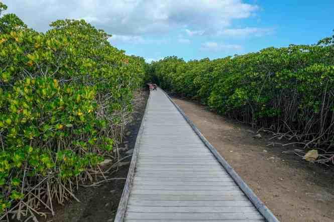 sentier-de-la-mangrove-de-Ouémo-faune