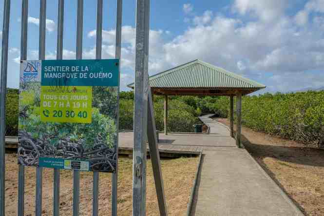 sentier de la mangrove de Ouémo