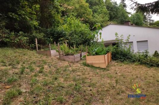 Drei Hochbeete hat die Garten-AG schon gebaut und bepflanzt.