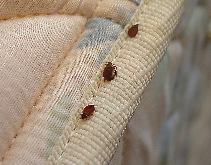 Prayer Against Bugs and Pest Infestations
