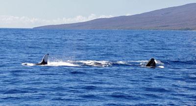 Humpback_Whale_Watching_web