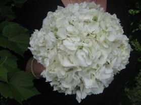 Buffalo Wedding Flowers