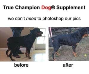 big rottweiler muscle dog vitamin supplements