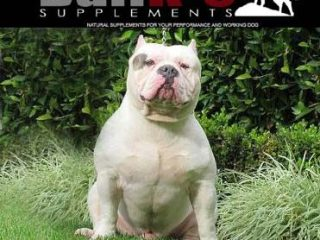 bully muscle builder supplements