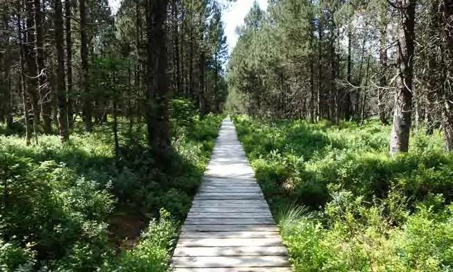 Beispielhafte Wegeführung in den Wäldern der Welterbe-Kulisse. (Foto: RMP)
