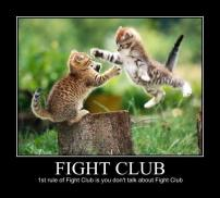 Fight-Club kittens