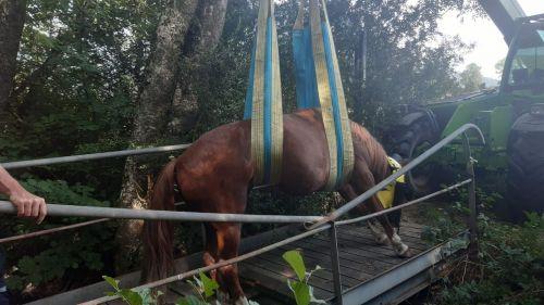 PHOTOS. Isère : le sauvetage spectaculaire d'un cheval de 500 kilos, coincé sur un pont en bois