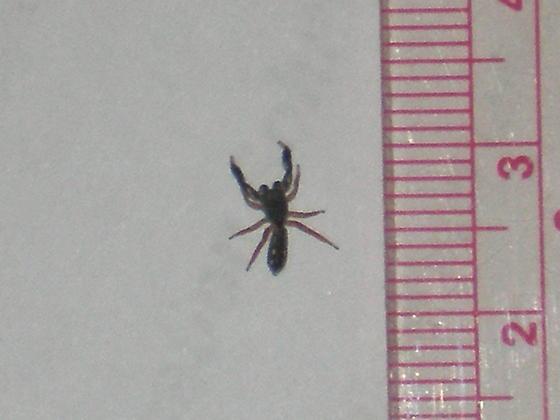 Small Bug Looks Like Scorpion