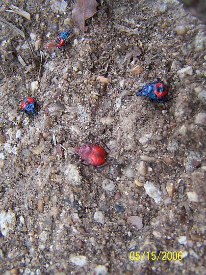 Blue Bug Red Wings