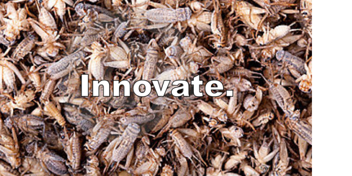 innovateinsects