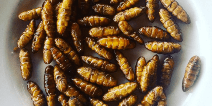 "Insects, Italian Cuisine, and ""Natural Remedies"""