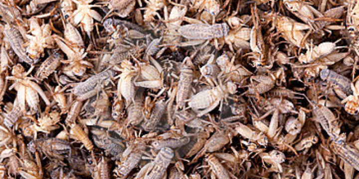 Insect Farming is helping Thailand's Farmers