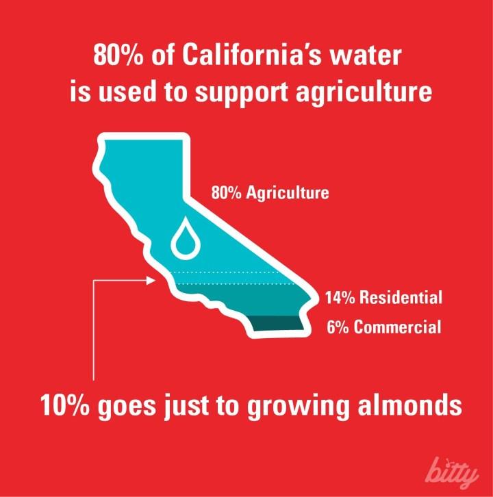 Water Crisis Crickets