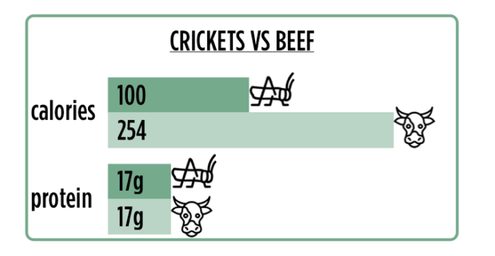 crickets-v-beef.png