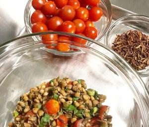 Mealworm Lentil Salad Ingredients