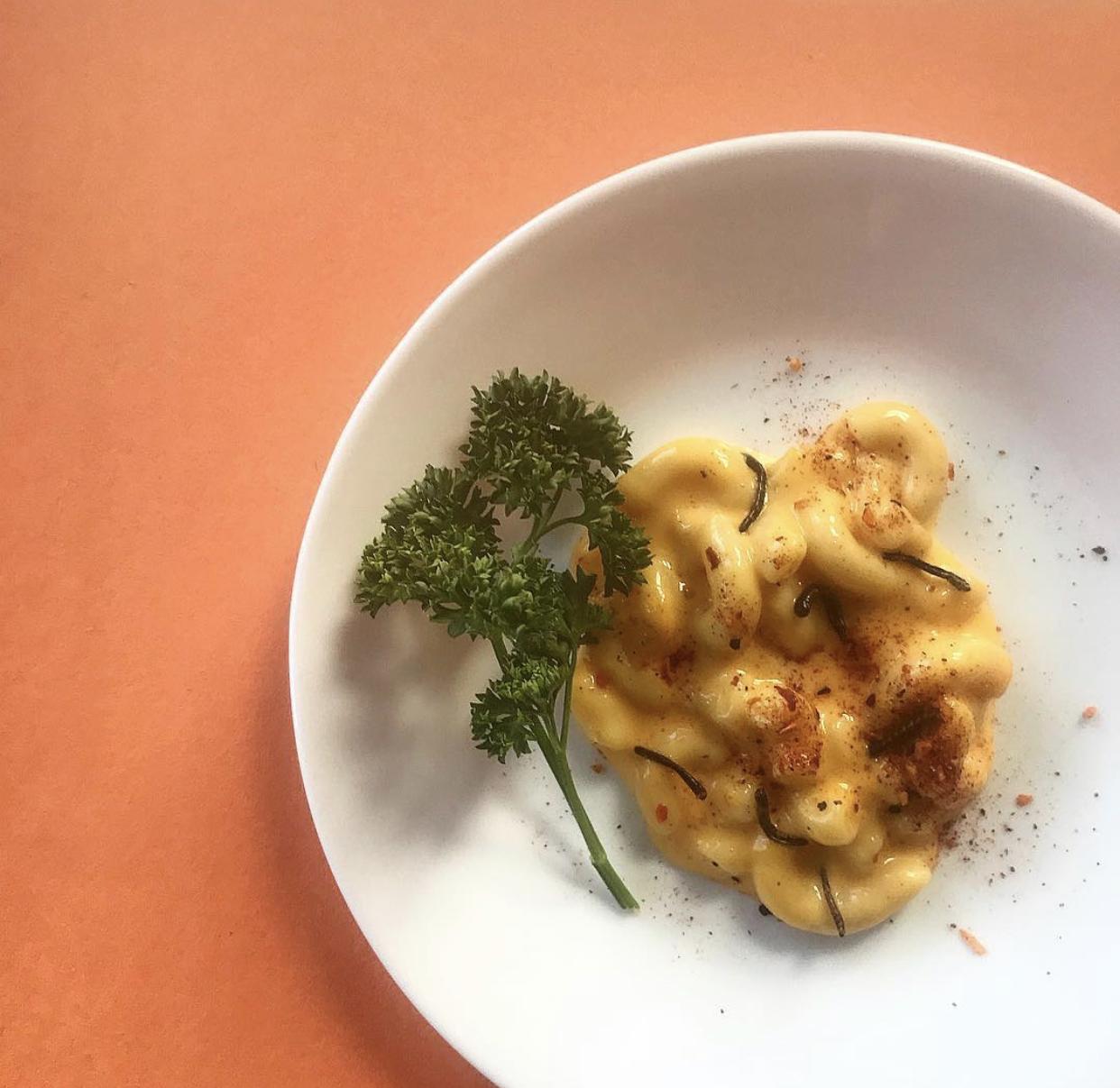 mealworm mac n cheese