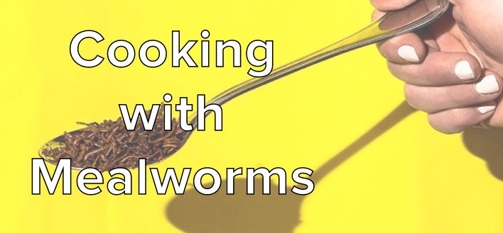 cooking-with-mealworms