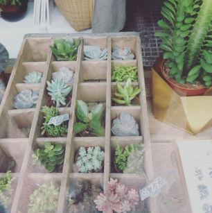Succulents From Victoria