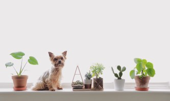 Kates plants