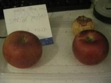 8 Homeschool Apples Change
