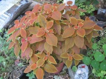 5 Homeschool Fall Garden