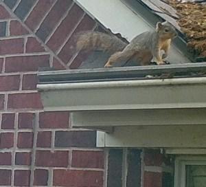 Squirrel near opening