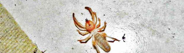 A Wind Scorpion in Edinburg, Texas