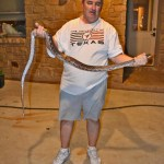 Texas Rat Snake (Elaphe obsoleta lindheimeri); T.K., Dripping Springs, TX --- 15 Apr 2012