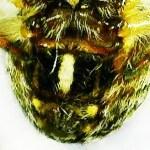 Fig. 205. Ventral abdomen