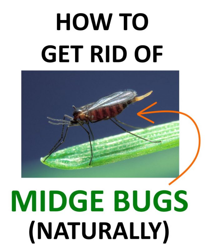 how to get rid of midge bugs no see