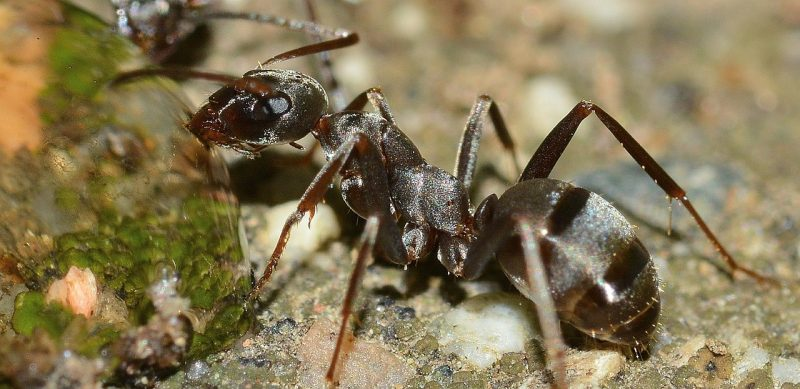 how to get rid of tiny ants in the