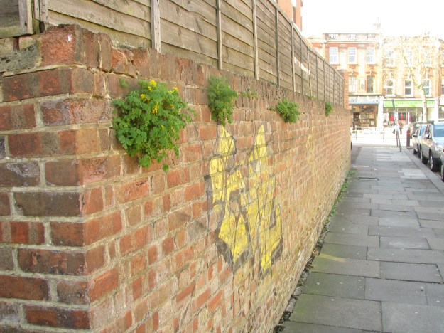 Yellow flowers, yellow graffiti