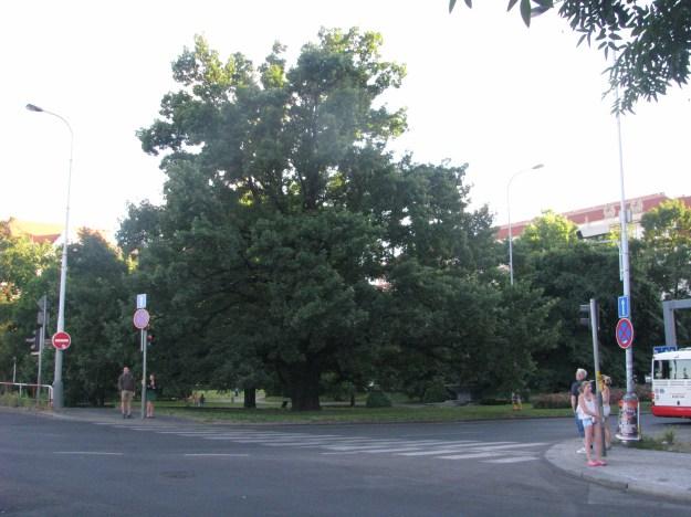 Prague Oaktree Blog