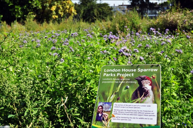 Some London parks have been growing sparrow-friendly plants (George Rex [CC BY-SA 2.0 (http://creativecommons.org/licenses/by-sa/2.0)], via Wikimedia Commons)