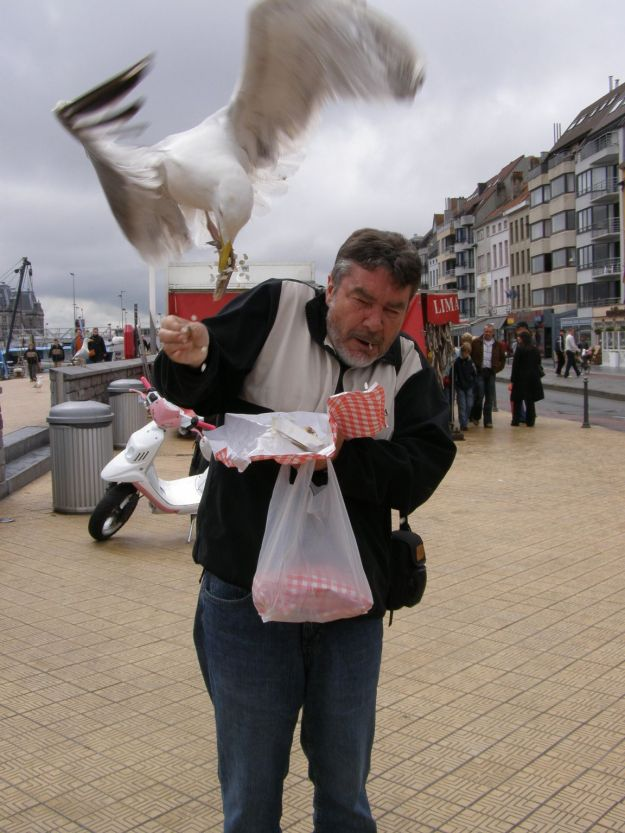 "Ambushed by Herring Gull in Ostende....(""Birdsniper"" by loki11 - own work -place Oostende ( Belgium). Licensed under Public Domain via Wikimedia Commons - http://commons.wikimedia.org/wiki/File:Birdsniper.jpg#mediaviewer/File:Birdsniper.jpg"