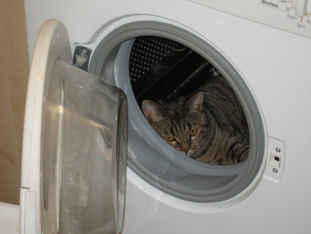 Aaargh! Don't try this at home...Lee in the washing machine.